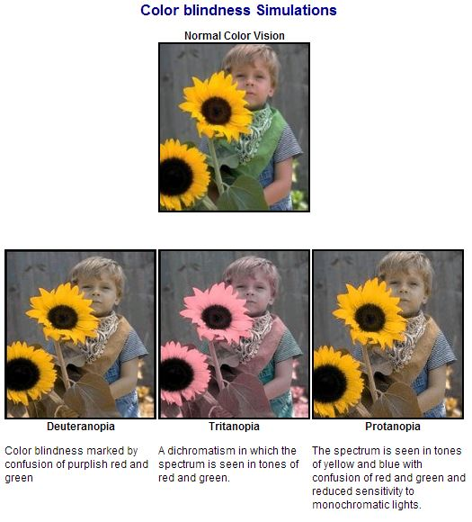 Four photos of a little boy with sunflowers display what people with different color blind conditions can see.