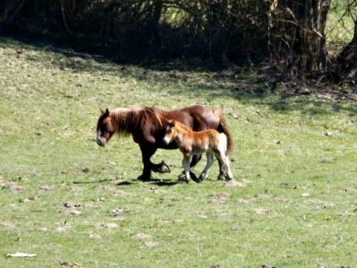 horses mama baby