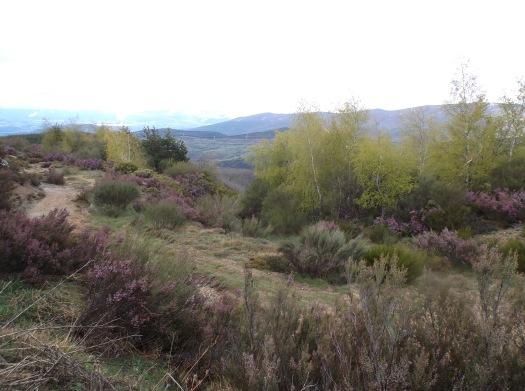 Camino 1271
