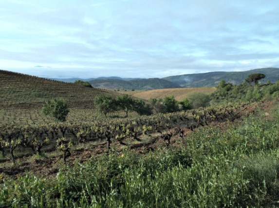 Vineyards near Pieros, Spain