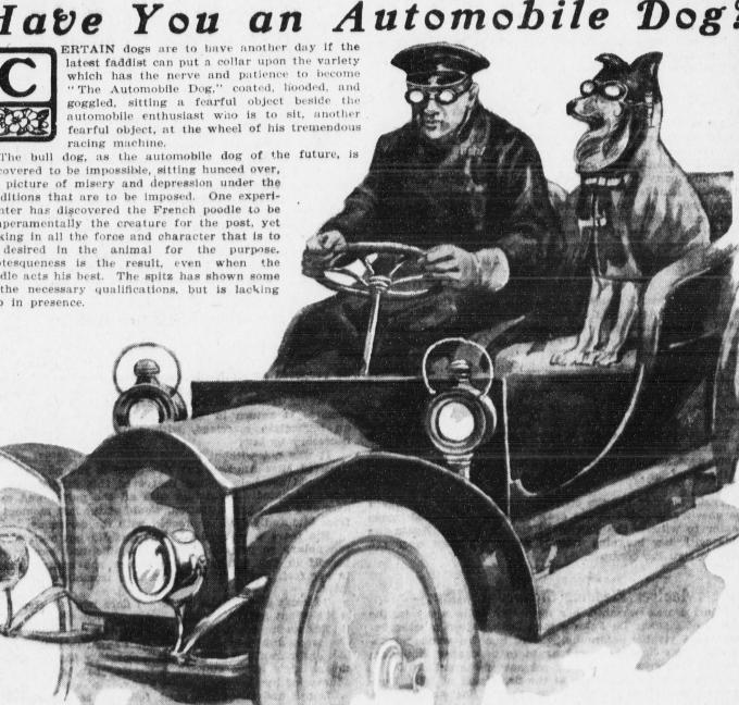 dog automobile